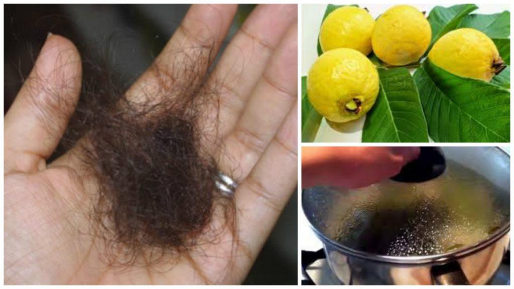 Hoja de guayaba para el cabello