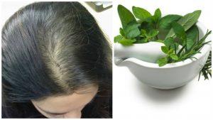 Salvia y romero para la caida del cabello