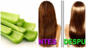 Apio para alisar el pelo